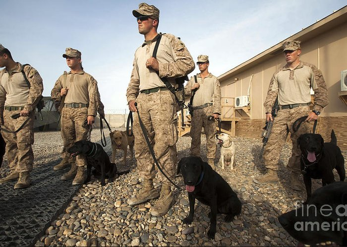 Dog Handlers Greeting Card featuring the photograph A Group Of Dog-handlers Conduct by Stocktrek Images