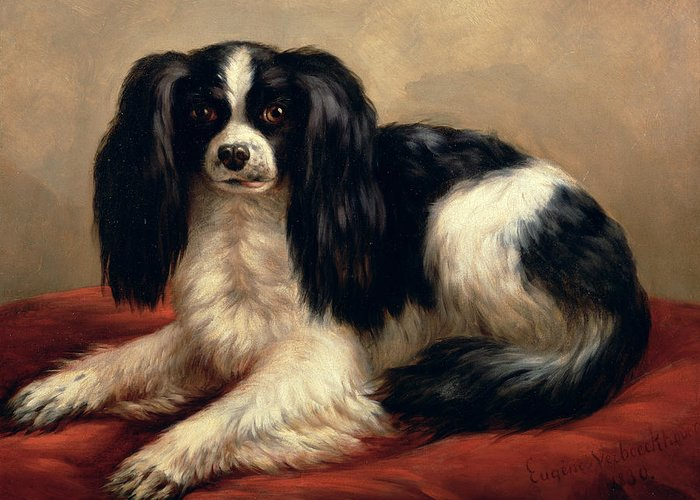 A King Charles Spaniel Seated On A Red Cushion Greeting Card featuring the painting A King Charles Spaniel Seated On A Red Cushion by Eugene Joseph Verboeckhoven