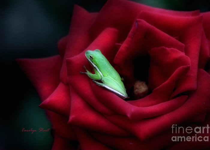 Roses Greeting Card featuring the photograph A Little Bed of Roses by Carolyn Staut