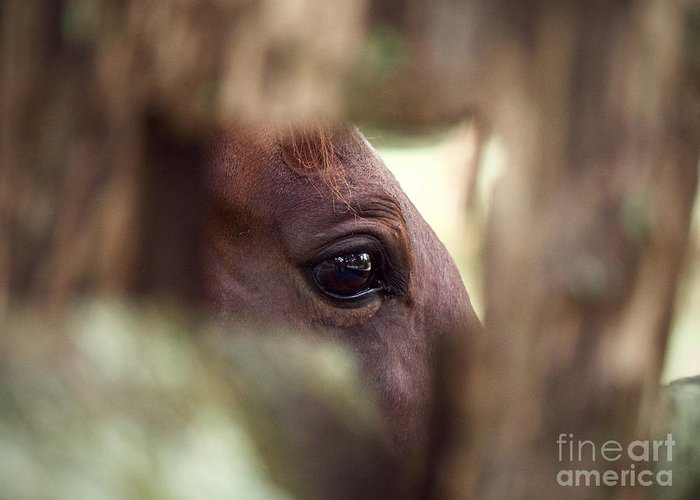 Horse Greeting Card featuring the photograph A Little Window by Rachel Morrison
