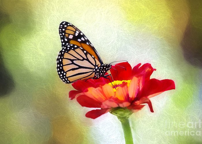Nature Greeting Card featuring the photograph A Monarch Moment by Sharon McConnell
