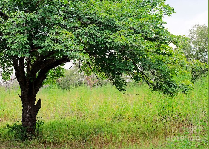 Tree Greeting Card featuring the photograph A Mulberry Summer by Gary Richards