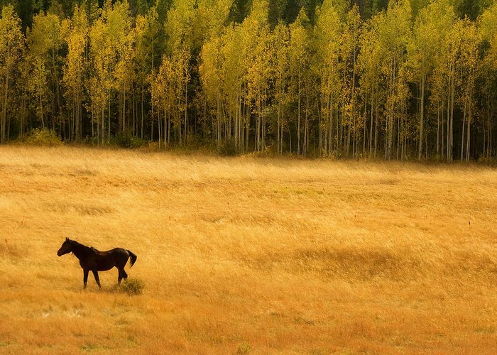 Gold Greeting Card featuring the photograph A Nice Autumn Day by James BO Insogna