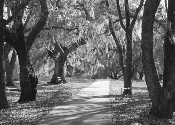 Black And White Greeting Card featuring the photograph A Place For Contemplation - Black And White by Suzanne Gaff