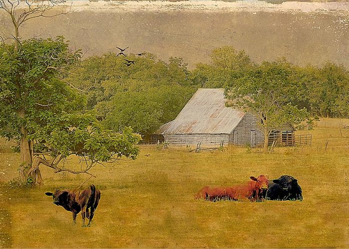 Barns Greeting Card featuring the photograph A Place For Togetherness by Jan Amiss Photography