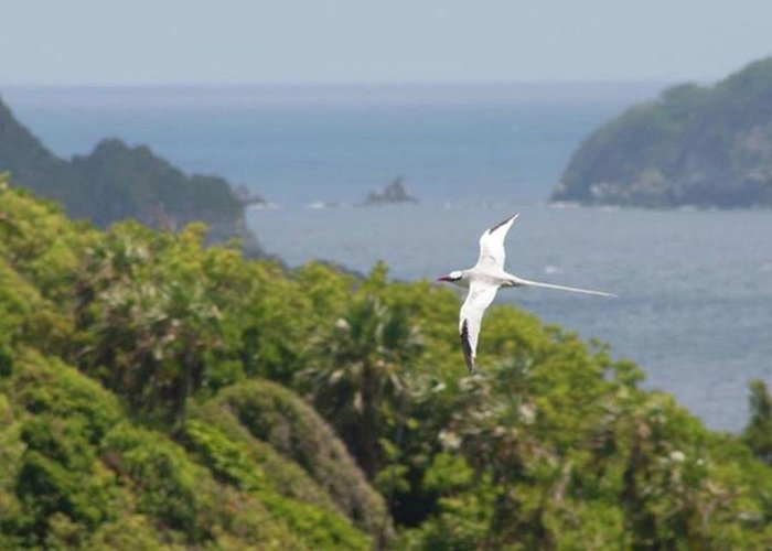 Tropicbird Greeting Card featuring the photograph A Red-billed Tropicbird (phaethon by John Edwards