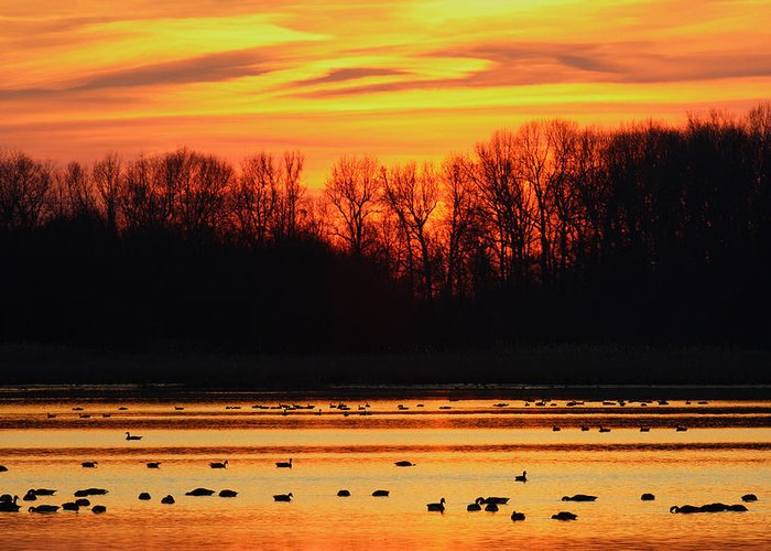 Sunset Greeting Card featuring the photograph A Scene At Bombay Hook National by George Grall