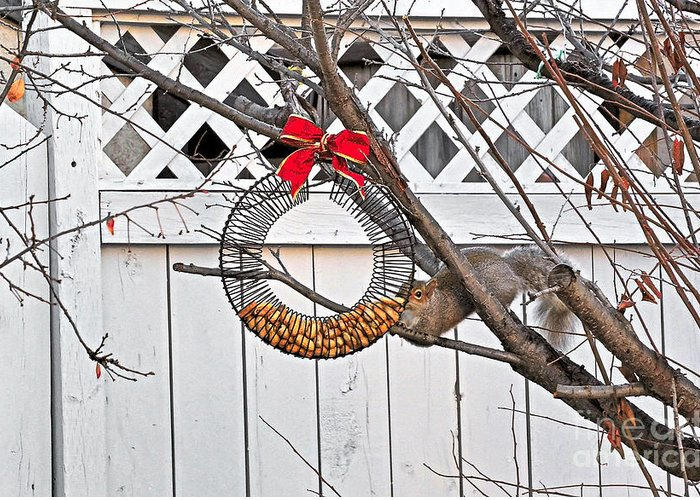 Animal Greeting Card featuring the photograph A Squirrel Christmas by V Oakes