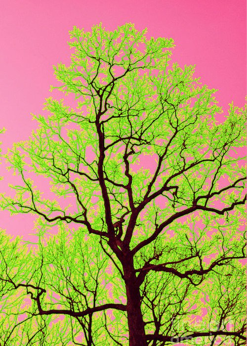 Lime Green Greeting Card featuring the photograph A Tree Grows In Vegas by Valerie Fuqua