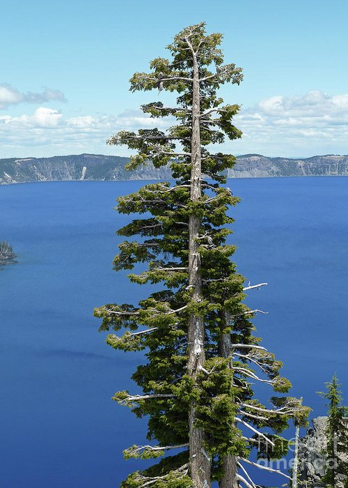 A Tree With A View Greeting Card featuring the photograph A Tree With A View by Methune Hively