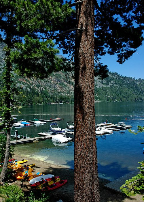Usa Greeting Card featuring the photograph A Trees View Of Fallen Leaf Lake by LeeAnn McLaneGoetz McLaneGoetzStudioLLCcom