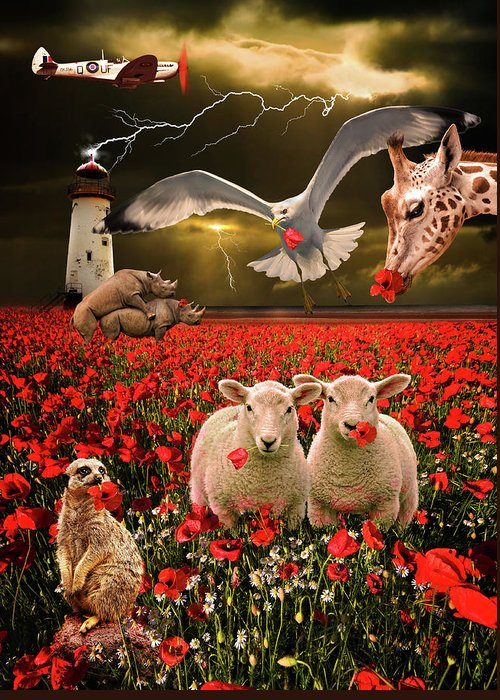 Sheep Greeting Card featuring the photograph A Very Strange Dream by Meirion Matthias