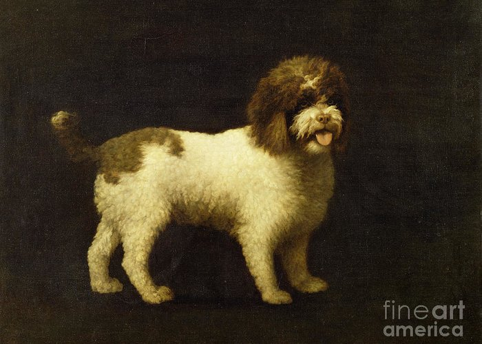 Water Greeting Card featuring the painting A Water Spaniel by George Stubbs