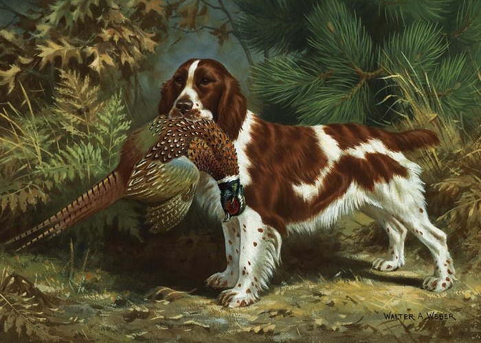 Illustration Greeting Card featuring the photograph A Welsh Springer Spaniel Holds A Dead by Walter A. Weber