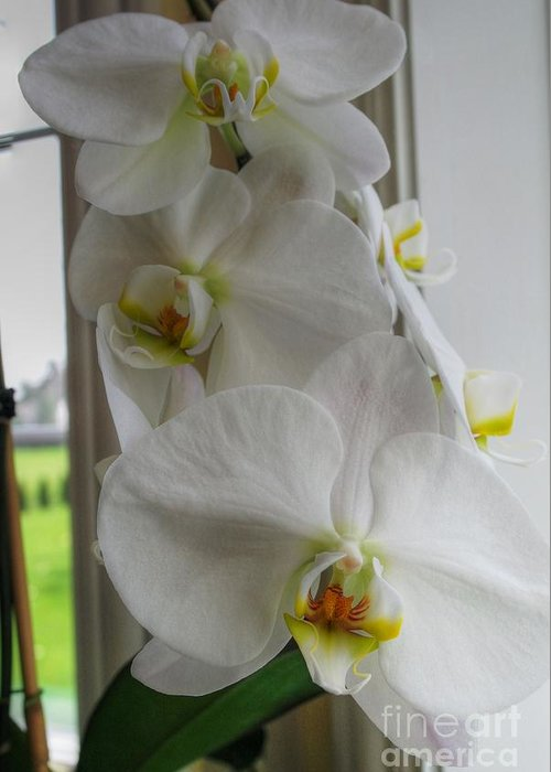 Orchid Greeting Card featuring the photograph A White Orchid Day by David Bearden