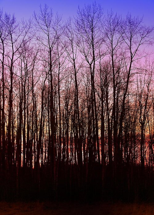 Trees Greeting Card featuring the photograph A Winter Sunset by Julius Reque