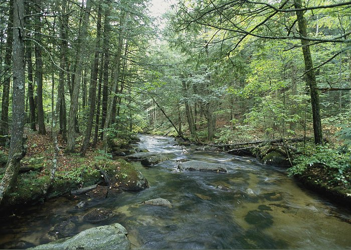 United States Of America Greeting Card featuring the photograph A Woodland View With A Rushing Brook by Heather Perry