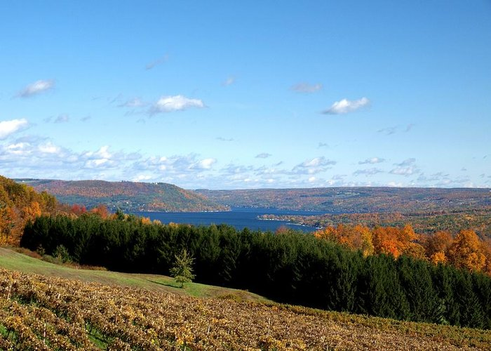 Keuka Lake Greeting Card featuring the photograph Above The Vines by Joshua House