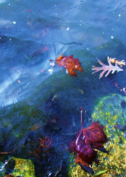 Abstract Water And Fall Leaves Greeting Card featuring the photograph Abstract-10 by Todd Sherlock