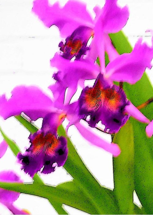 Flowers Greeting Card featuring the digital art Abstract Iris by Anita Burgermeister