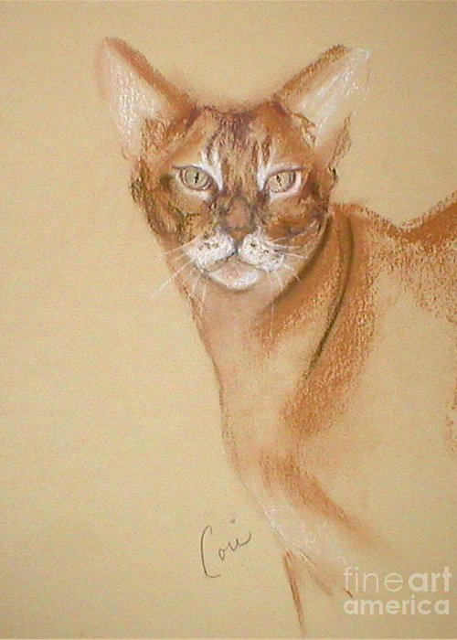 Pastel Greeting Card featuring the drawing Abyssinian by Cori Solomon