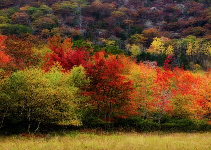 Acadia Greeting Card featuring the photograph Acadia Colors by Linda Cullivan