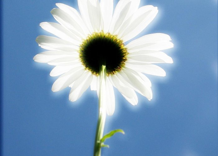 Daisy Greeting Card featuring the photograph Achievement by Idaho Scenic Images Linda Lantzy