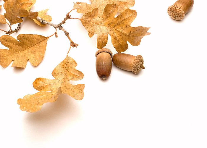 Acorn Greeting Card featuring the photograph Acorns And Oak Leaves by Utah Images