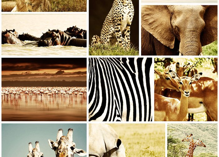 Africa Greeting Card featuring the photograph African Animals Safari Collage by Anna Om