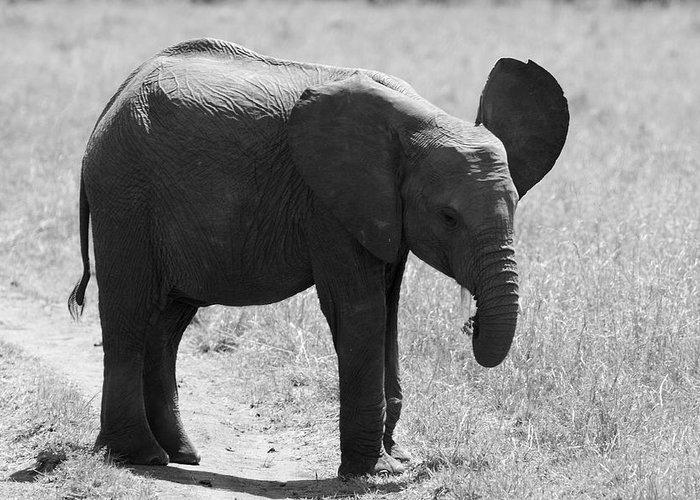 Elephant Greeting Card featuring the photograph African Elephant Calf by Aidan Moran