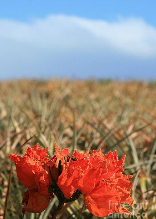 Aloha Greeting Card featuring the photograph African Tulip Blossom Over Pineapple Field Aloha Makawao by Sharon Mau