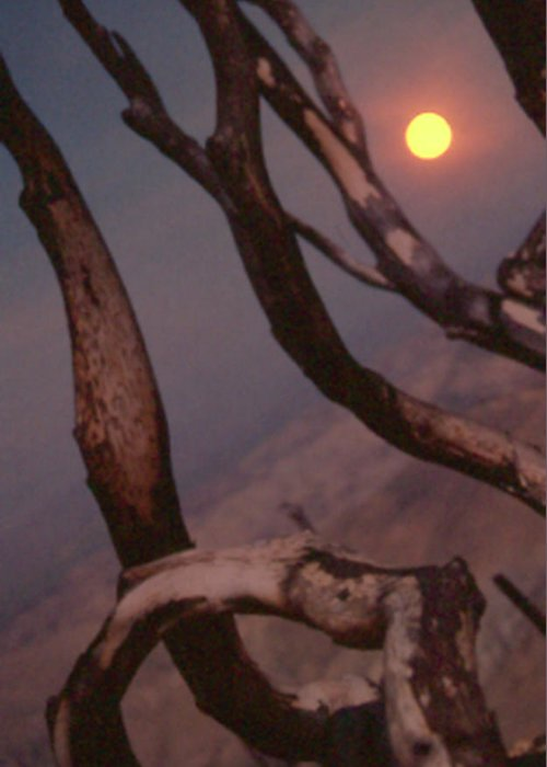Trees Greeting Card featuring the photograph After The Fire by Gary Brandes