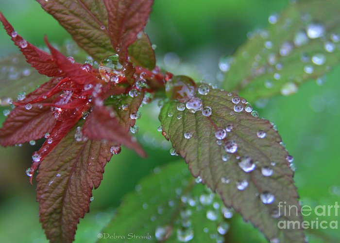 Spirea Greeting Card featuring the photograph After The Rain by Debra Straub