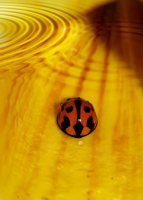 Ladybeetle Greeting Card featuring the photograph After The Rain by Lesley Smitheringale