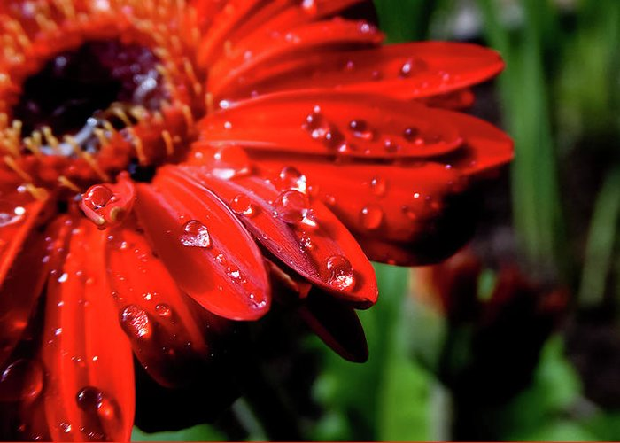 Dew Greeting Card featuring the photograph After The Rain by MotionOne Studios