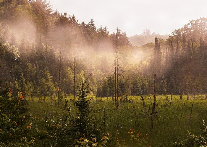 Algonquin Park Greeting Card featuring the photograph Afternoon Mist by Linda McRae