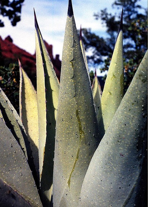 Agave Greeting Card featuring the photograph Agave by Heather S Huston