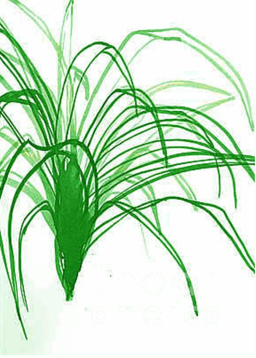 Spider Plant Greeting Card featuring the digital art Airplane Plant by Robin Miller-Bookhout