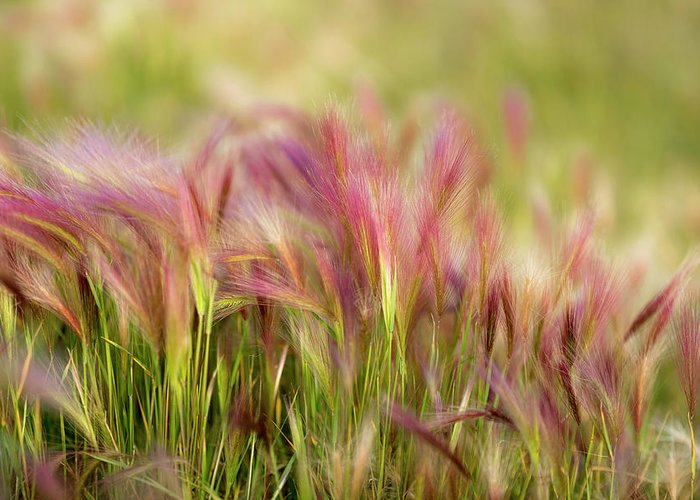 Abstract Greeting Card featuring the photograph Alaska Foxtail by Scott Slone