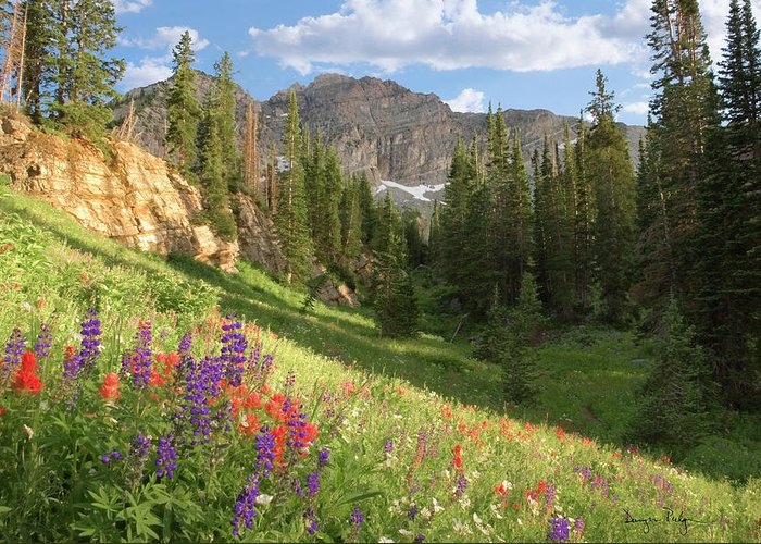 Meadows Greeting Card featuring the photograph Albion Basin Wasatch Mountains Utah by Utah Images