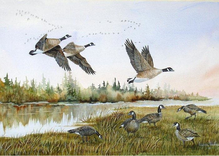 Aleutian Geese Greeting Card featuring the painting Aleutian Geese At Lake Earl by Lynne Parker