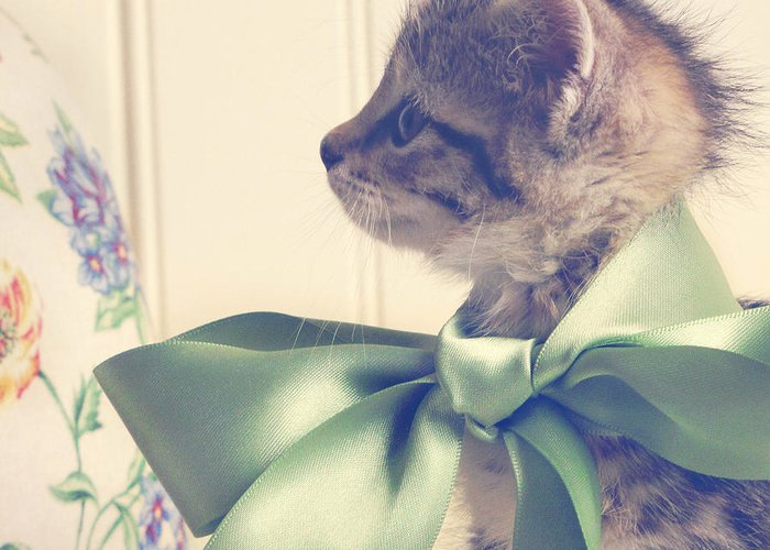 Kitten Greeting Card featuring the photograph All Dressed Up by Amy Tyler