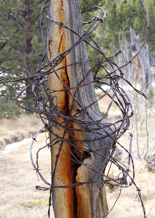 Barbed Wire Greeting Card featuring the photograph All In A Tangle by Cynthia Cox Cottam