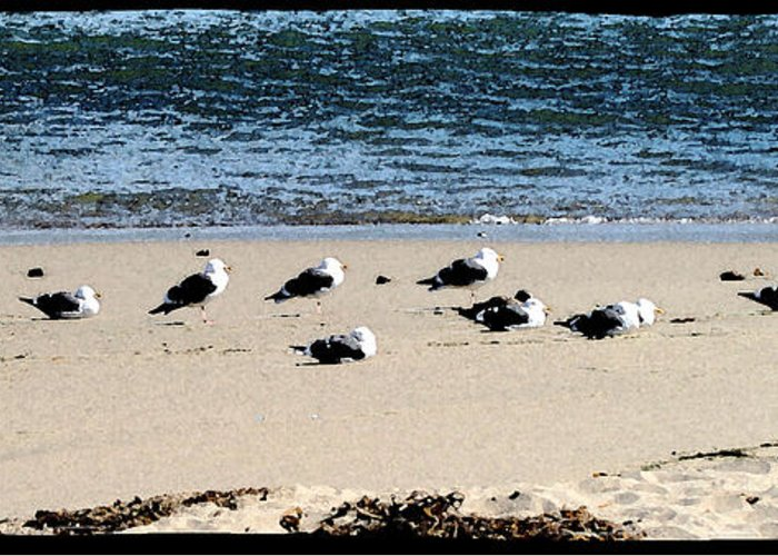 Bird Greeting Card featuring the photograph All My Gulls In A Row by Ellen Lerner ODonnell