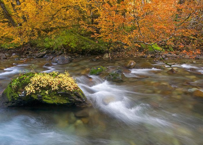 Stream Greeting Card featuring the photograph All That Is Gold by Mike Dawson