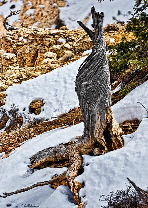 Tree Greeting Card featuring the photograph All That Remains by Christopher Holmes