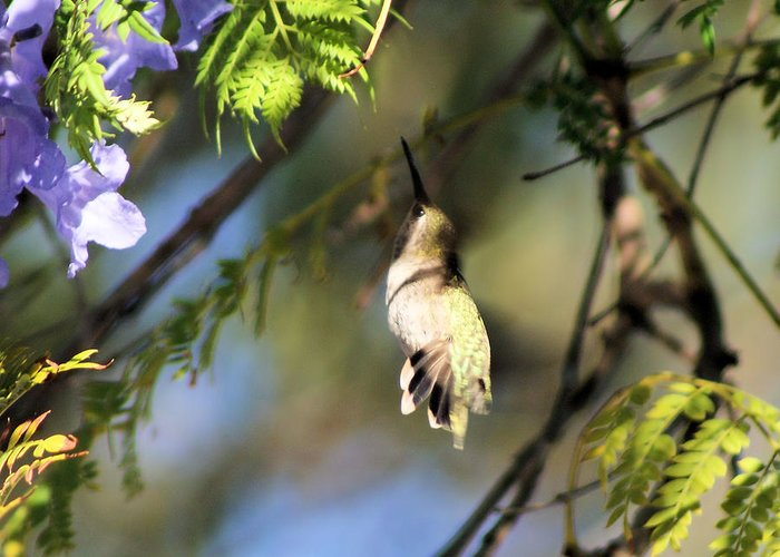 Hummingbird Greeting Card featuring the photograph All The Way Up There by Ellen Lerner ODonnell