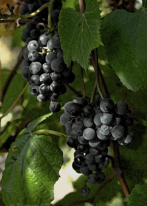 Grapes Greeting Card featuring the photograph Almost Harvest Time by Michael Flood