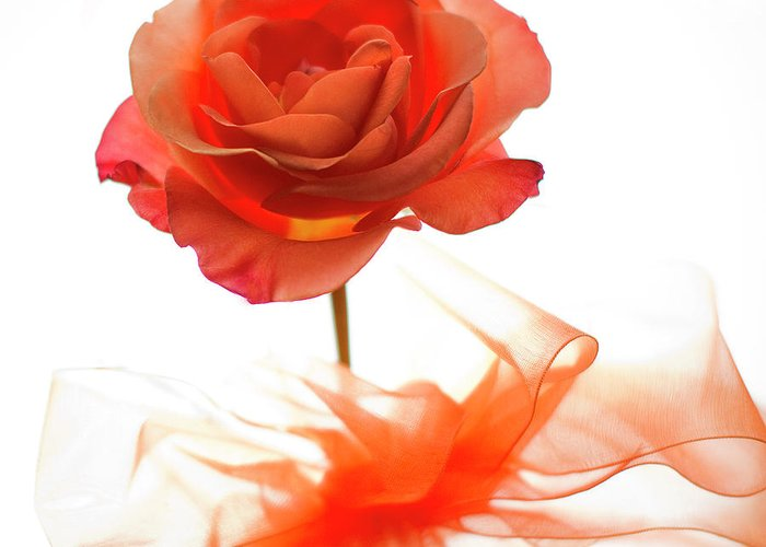 Rose Greeting Card featuring the photograph Almost Perfect by Rebecca Cozart