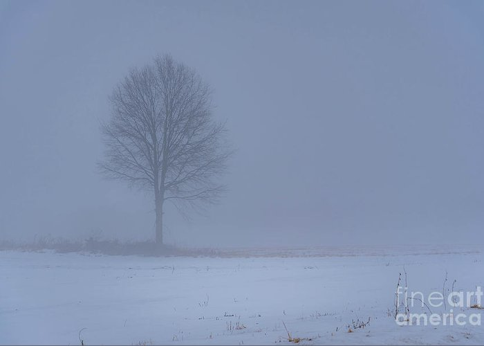 Tree Mist Fog Winter Snow Dull Morning Ohio Greeting Card featuring the photograph Alone In The Mist by Darren Walker